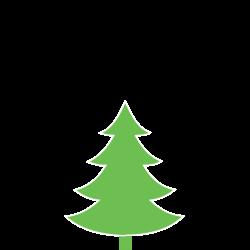 Smrk pichlavý 100‑150cm