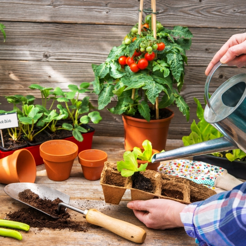 Přísada zeleniny