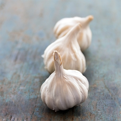 Garlic sets