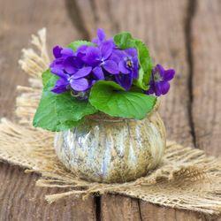 Sezónní květiny