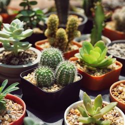 Cactuses and succulents