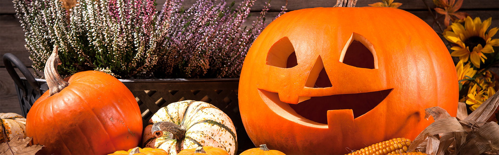 """<p data-aos=fade-up style=""""text-align:center""""><strong>Pumpkins Festival Úvalno</strong></p>"""