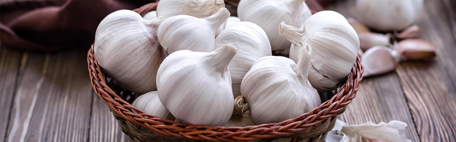 "<p data-aos=fade-up style=""text-align:center""><strong>Czech garlic</strong></p>"